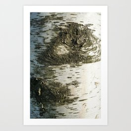 Birch Bark I Art Print