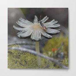 Mushroom on Grasshopper Metal Print