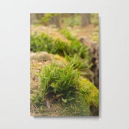 Fern in the Boundary Waters Canoe Area Wilderness Metal Print