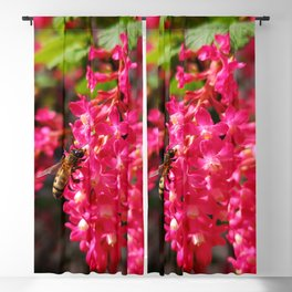 Bee and Blood Currant Ribes Sanguineum std Blackout Curtain