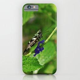 A Dangling Dalliance iPhone Case