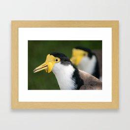 Australian Masked Lapwing Framed Art Print
