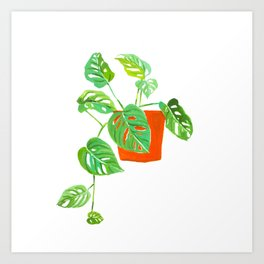 Monstera Obliqua Art Print