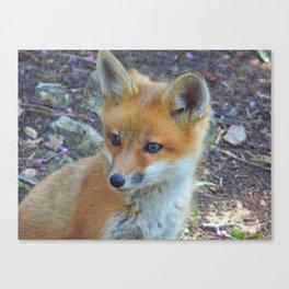 Fox 2018-1 Canvas Print
