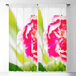 Beautiful Multicolor Tulip Green Leaves White Background #decor #society6 #buyart Blackout Curtain