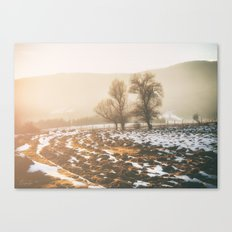 Morning field Canvas Print