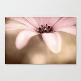 Pure Sweetness a single daisy Canvas Print