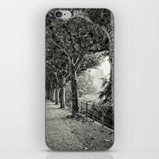 Sycamore 496 iPhone & iPod Skin