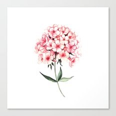Watercolor flower phlox Canvas Print