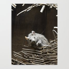 Two Mice In A Broken Basket Poster