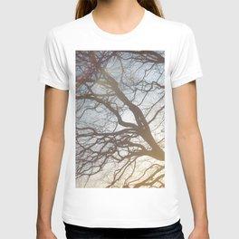Dream Trees T-shirt
