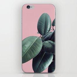 Ficus Elastica #14 #CoralBlush #decor #art #society6 iPhone Skin