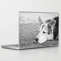 husky Laptop & iPad Skins featuring husky by MrBdigital