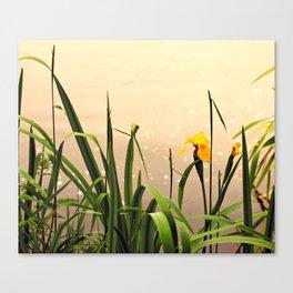 Wild Iris in the Autumn Canvas Print