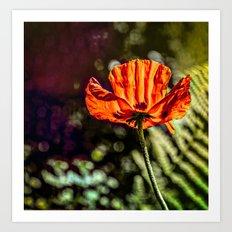 Glowing Poppy  Art Print