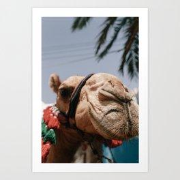 Camel in Colorful Nubian Village in Aswan Egypt, Africa Art Print Art Print