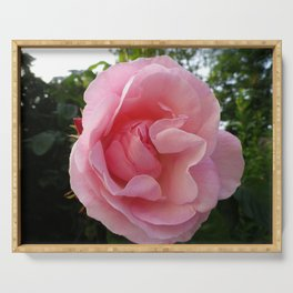 PERFECT PALE PINK ENGLISH ROSE Serving Tray