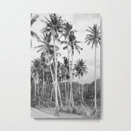 Crystal Bay Palms Metal Print