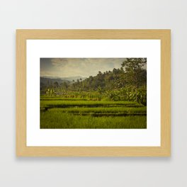 Balapusuh Village Rice Paddies Framed Art Print