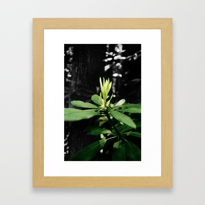 Laurel Bloom Framed Art Print