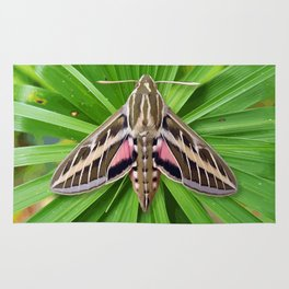 White Lined Sphinx Hyles Lineata Moth on Palm Rug