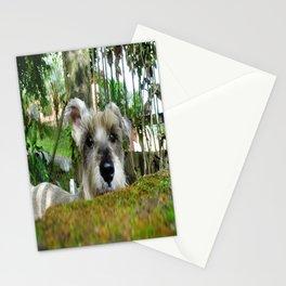 Little Nacho  Stationery Cards