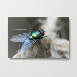 Blue Bottle Fly On Garden Twine Metal Print