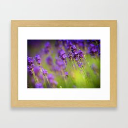 Textured background of lavender flowers Framed Art Print
