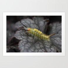 White Marked Tussock Caterpillar Art Print
