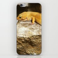lizard iPhone & iPod Skins featuring Lizard by GardenGnomePhotography