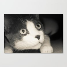What do you think Mr Cat? Canvas Print