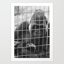 Sad Gorrilla  Art Print