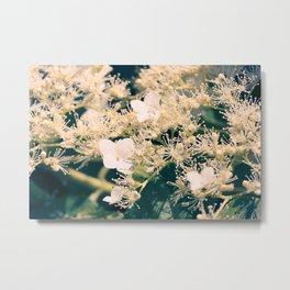 Hydrangea at June Metal Print