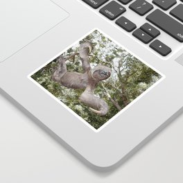 Sloth, A Real Tree Hugger Sticker