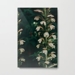 Flowers or Art - Flowers on a stem | Nature Photography Metal Print