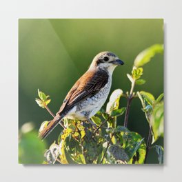 One Bird in the Bush (just one) Metal Print