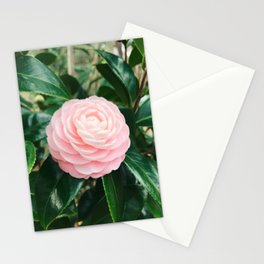 Camellia Japonica Stationery Cards