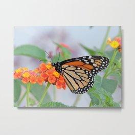 The Monarch Has An Angle Metal Print