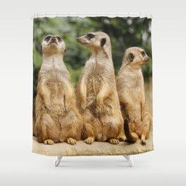 Meerkat20151204 Shower Curtain