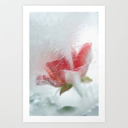 Ice cold rose Art Print