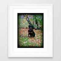 puppy Framed Art Prints featuring Puppy by PSimages