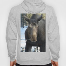 Moose Munching Poplar Lunch Hoody