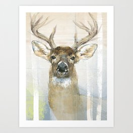 White-tailed Deer Surrounded By Birch Art Print