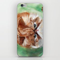 Grumpy Persian iPhone & iPod Skin