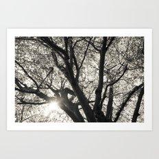 Sunlight through Hornbeam tree. Art Print