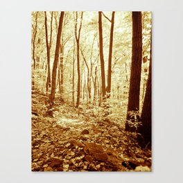 Deep in the Woods. Canvas Print