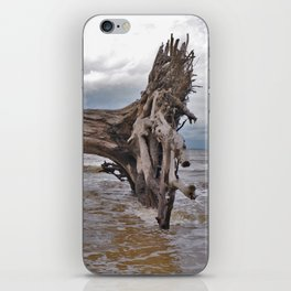 Drift Wood Beach 7 iPhone Skin