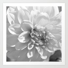 White Flower in the Summer Sun Art Print
