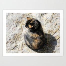 Sand Kitty Art Print