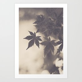 Leaves' Silhouette  Art Print